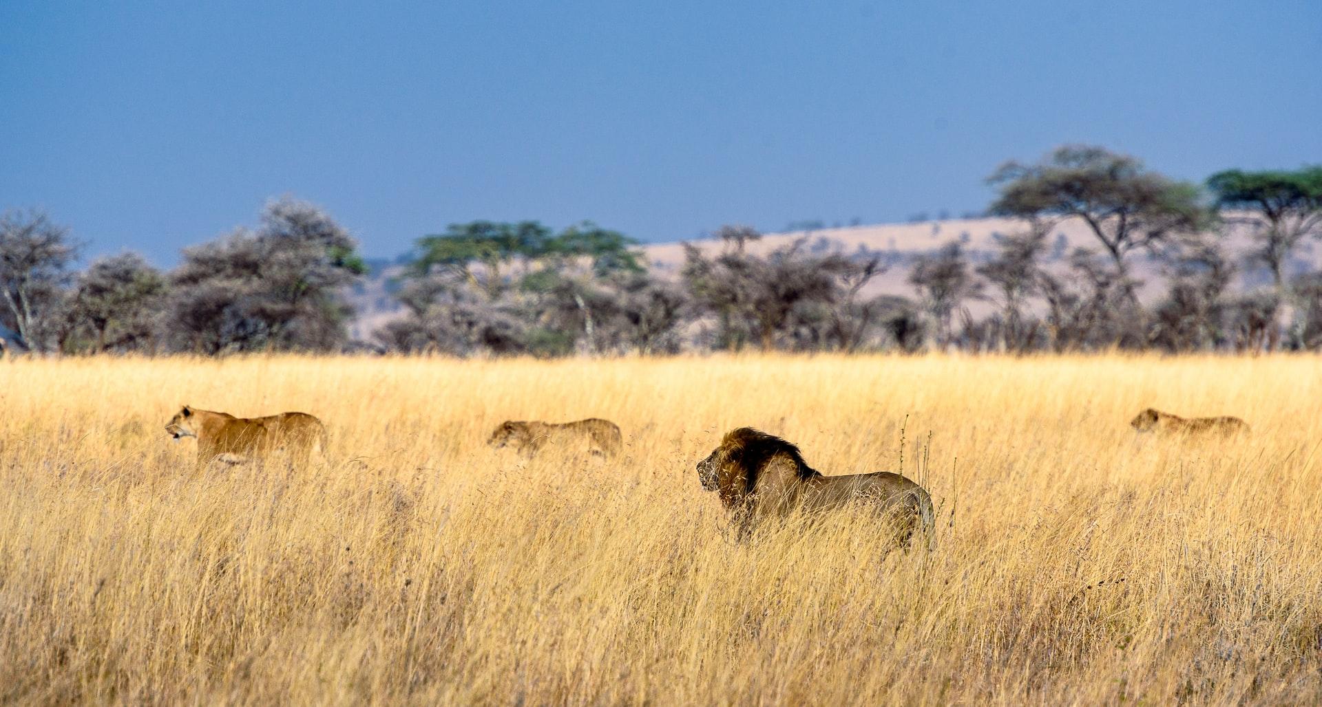 The Serengeti Tanzania
